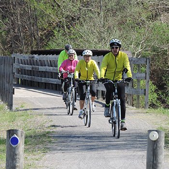 Group bikes down the Mon River Trail